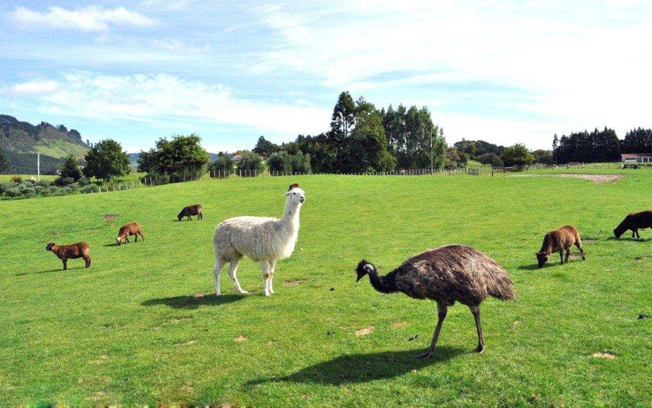 走进新西兰南北岛11日跟团游<【海外生活体验营】郑州起止 A27>