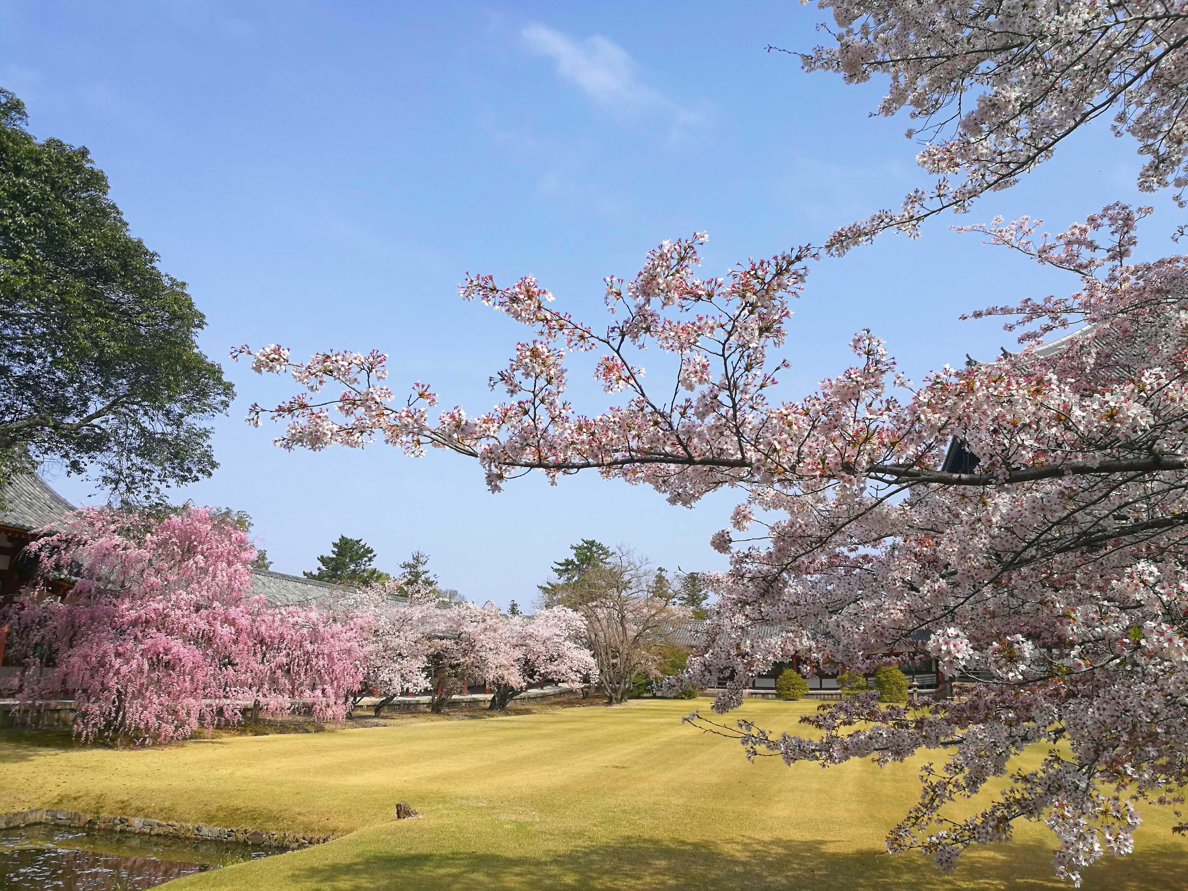 日本赏樱本州全景7日游